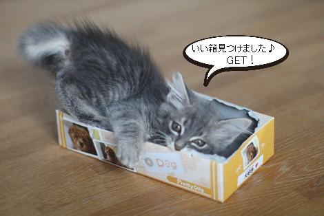 チープなおもちゃが大人気_e0151545_21373988.jpg