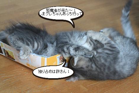 チープなおもちゃが大人気_e0151545_2144248.jpg