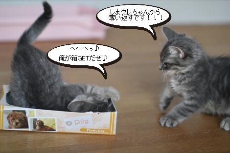 チープなおもちゃが大人気_e0151545_21452622.jpg