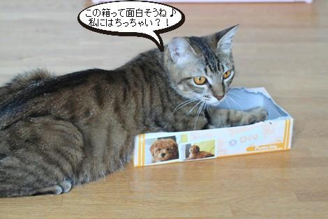 チープなおもちゃが大人気_e0151545_21481856.jpg