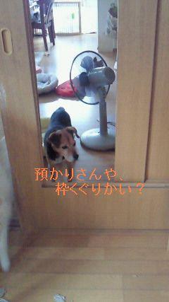 f0192863_1503450.jpg
