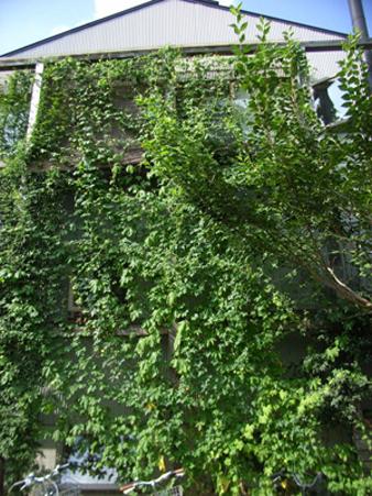壁面緑化_d0021969_9591814.jpg