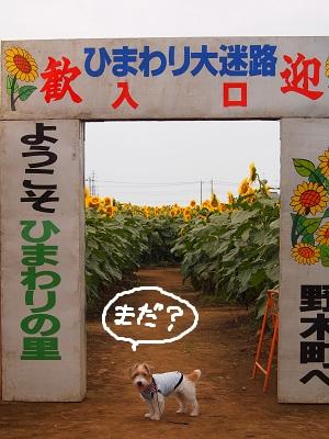 b0092580_05381.jpg