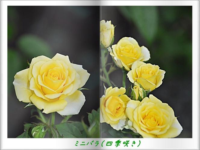 f0176499_2331854.jpg
