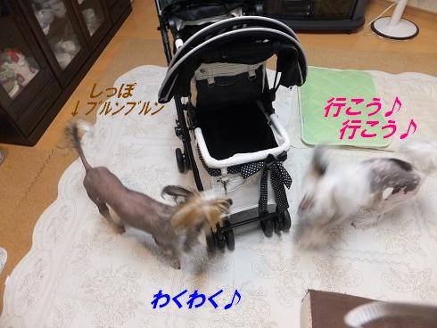 f0179203_19454831.jpg