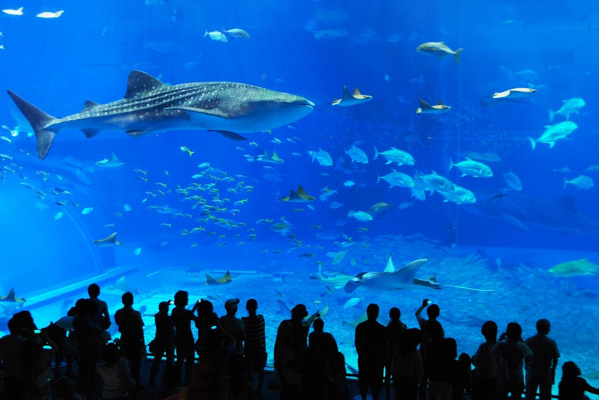 美ら海水族館へ : honohono collage ... : 無料 遊び : 無料