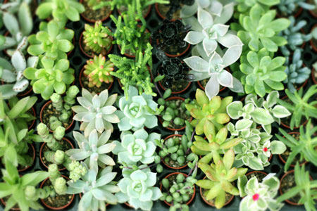 plants_c0118809_22552349.jpg