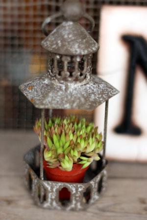 plants_c0118809_22553554.jpg