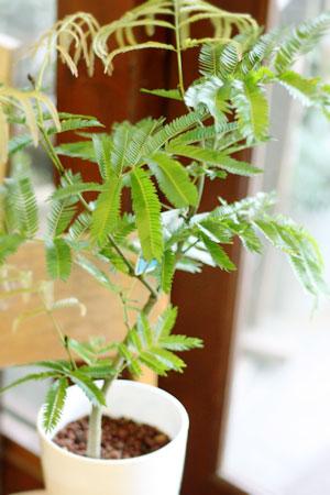 plants_c0118809_22565542.jpg