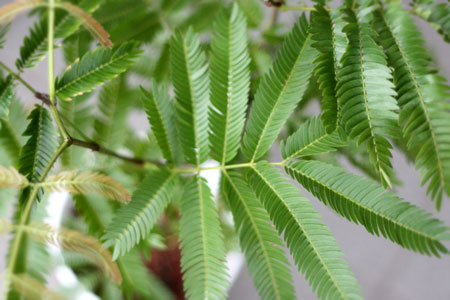 plants_c0118809_2257498.jpg