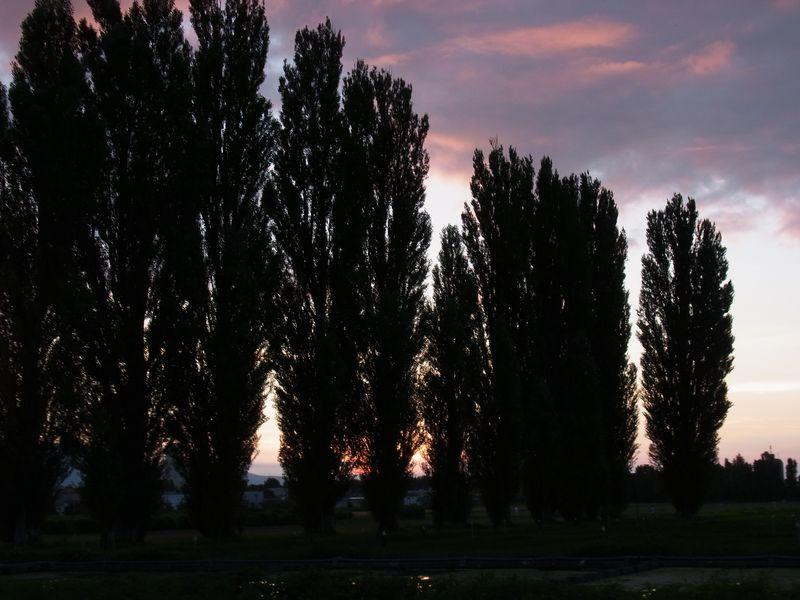 ポプラ並木の落日_c0025115_2075243.jpg