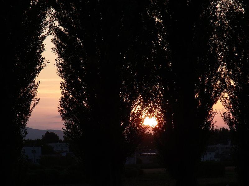 ポプラ並木の落日_c0025115_2075485.jpg