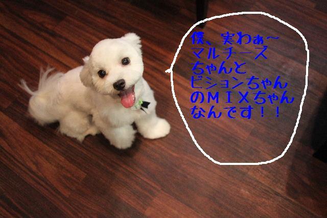 b0130018_18242969.jpg