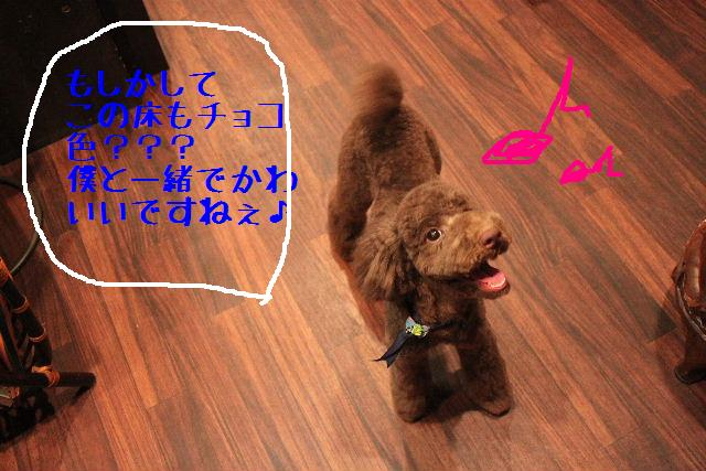 b0130018_182884.jpg