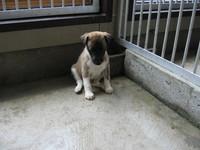 今日の子犬達_b0268228_20112195.jpg