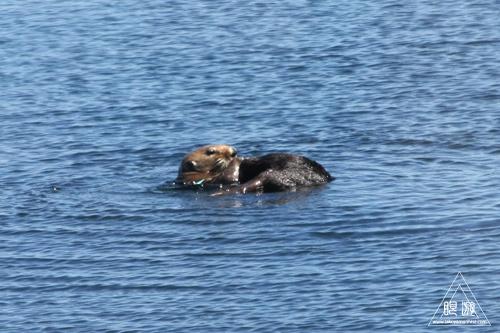 244 Monterey Bay Aquarium ~モントレーベイ水族館~_c0211532_17321544.jpg