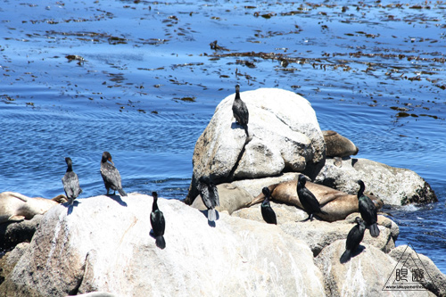 244 Monterey Bay Aquarium ~モントレーベイ水族館~_c0211532_20464784.jpg