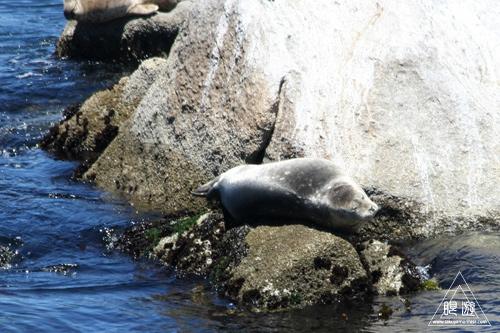 244 Monterey Bay Aquarium ~モントレーベイ水族館~_c0211532_21273152.jpg