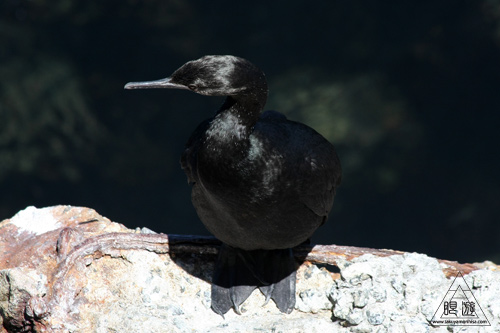 244 Monterey Bay Aquarium ~モントレーベイ水族館~_c0211532_21292151.jpg