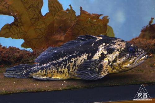 244 Monterey Bay Aquarium ~モントレーベイ水族館~_c0211532_23523159.jpg