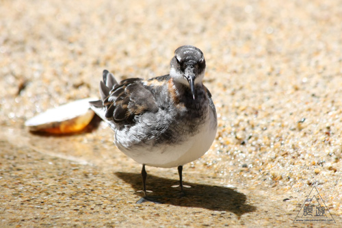 244 Monterey Bay Aquarium ~モントレーベイ水族館~_c0211532_23534133.jpg