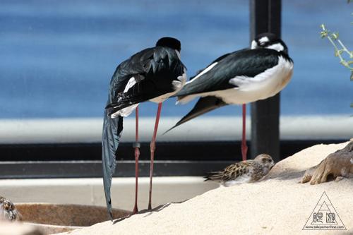 244 Monterey Bay Aquarium ~モントレーベイ水族館~_c0211532_23542814.jpg