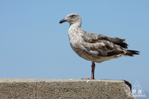 244 Monterey Bay Aquarium ~モントレーベイ水族館~_c0211532_235720100.jpg