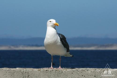 244 Monterey Bay Aquarium ~モントレーベイ水族館~_c0211532_23572681.jpg
