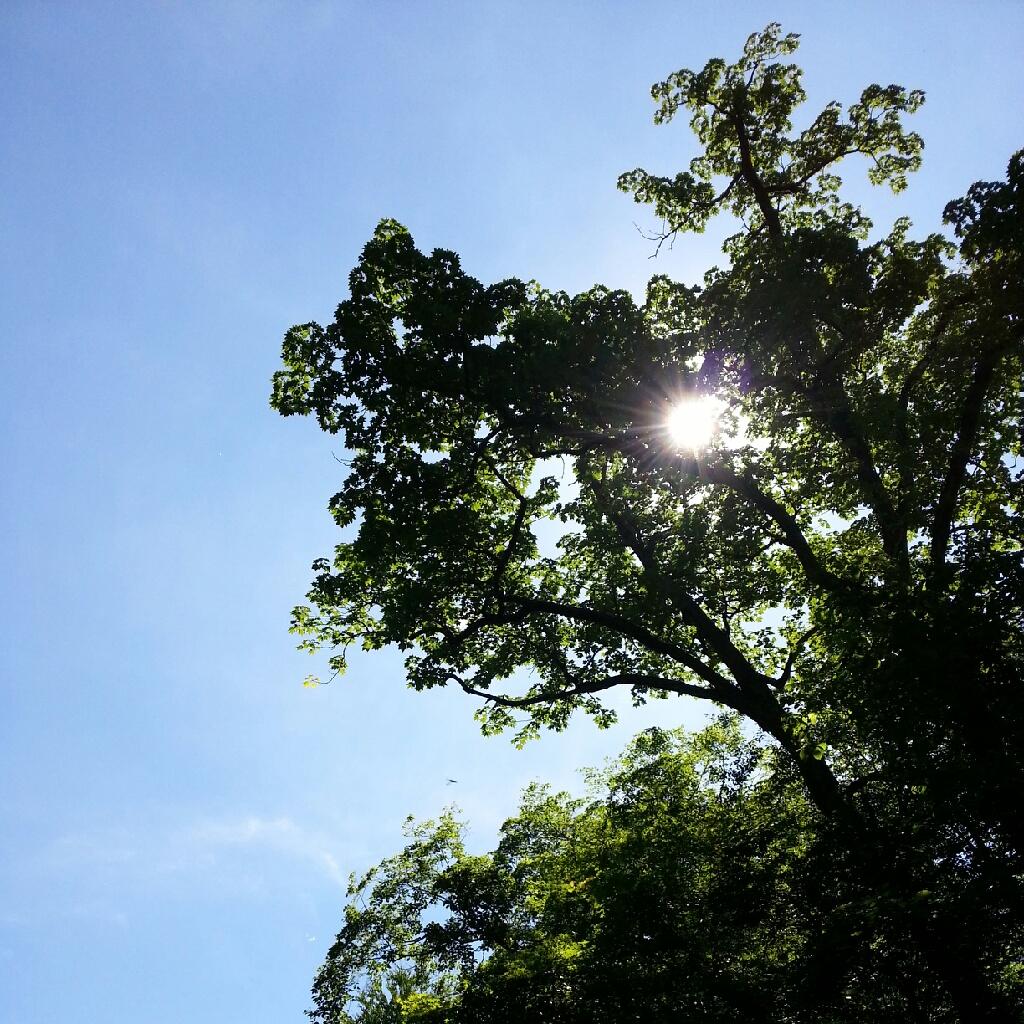 夏 きたね_e0173533_20122246.jpg