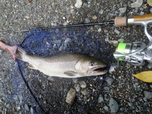 ・FISHING REPORT_a0165135_17513163.jpg