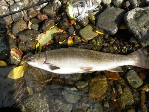 ・FISHING REPORT_a0165135_1756499.jpg