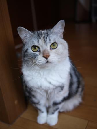 猫のお友だち さくらちゃん編。_a0143140_2316150.jpg