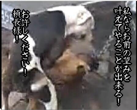 b0232447_19403419.jpg