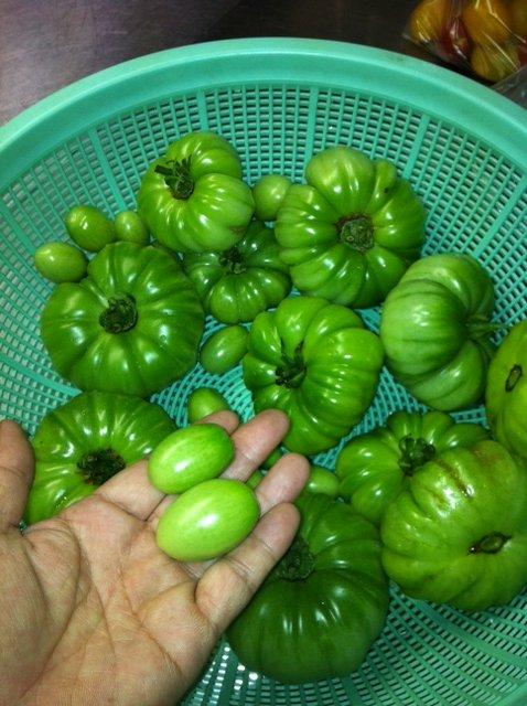若トマト・・・・大事な食材です_c0222448_1343112.jpg