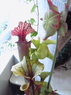 美術的な花。。。_a0229658_14194711.jpg