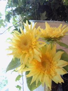 美術的な花。。。_a0229658_1429553.jpg