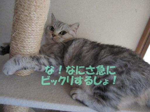 d0259267_10545453.jpg