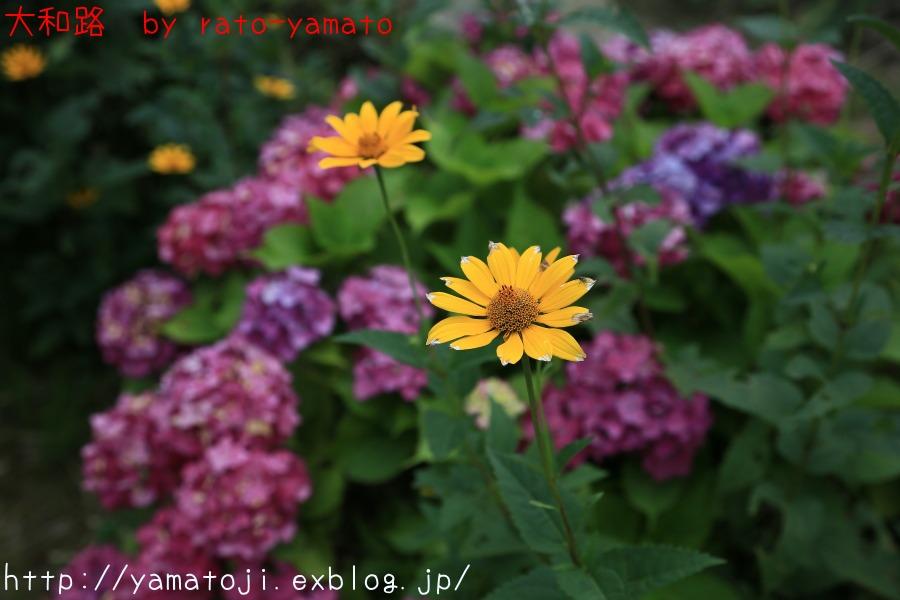 f0236776_201269.jpg