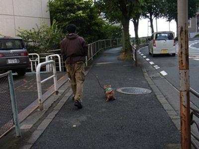 ばななの散歩_c0237493_22332431.jpg