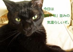 b0200310_20112382.jpg