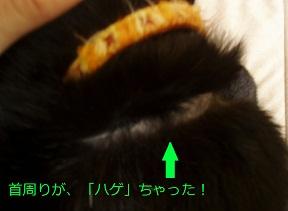 b0200310_2012971.jpg
