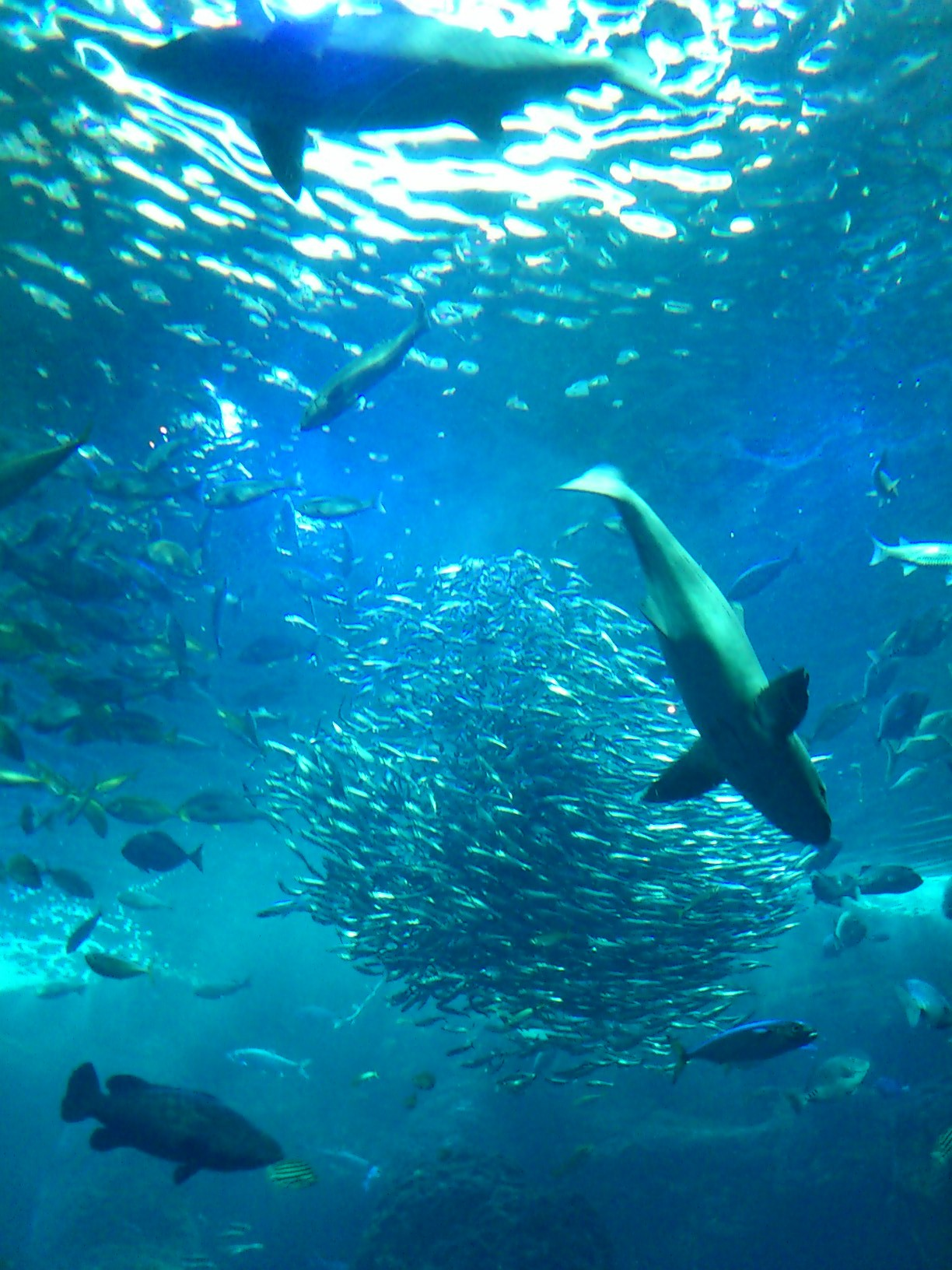 水族館_e0215910_2121237.jpg