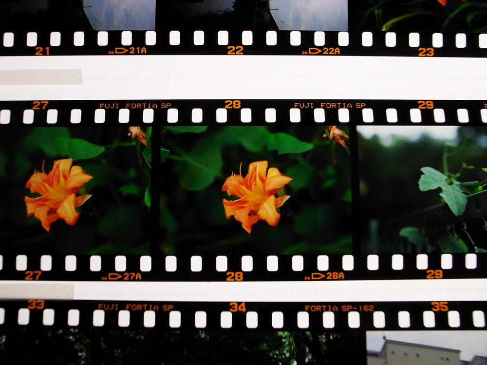 夏休み番外編 フィルムカメラを取り出して。~ペンタックスME-SuperとシグマDP2xで歩く坂川~_c0223825_1458219.jpg