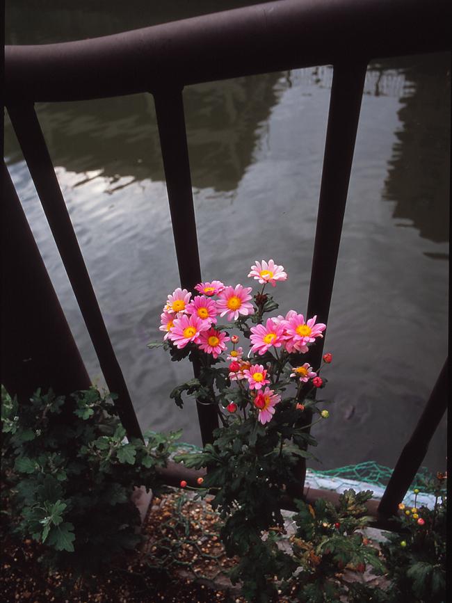 夏休み番外編 フィルムカメラを取り出して。~ペンタックスME-SuperとシグマDP2xで歩く坂川~_c0223825_15291170.jpg