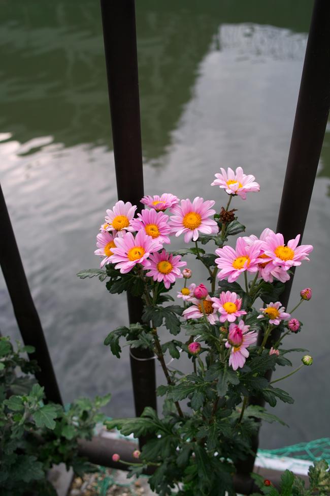 夏休み番外編 フィルムカメラを取り出して。~ペンタックスME-SuperとシグマDP2xで歩く坂川~_c0223825_15302068.jpg