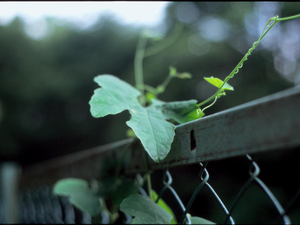 夏休み番外編 フィルムカメラを取り出して。~ペンタックスME-SuperとシグマDP2xで歩く坂川~_c0223825_16444468.jpg
