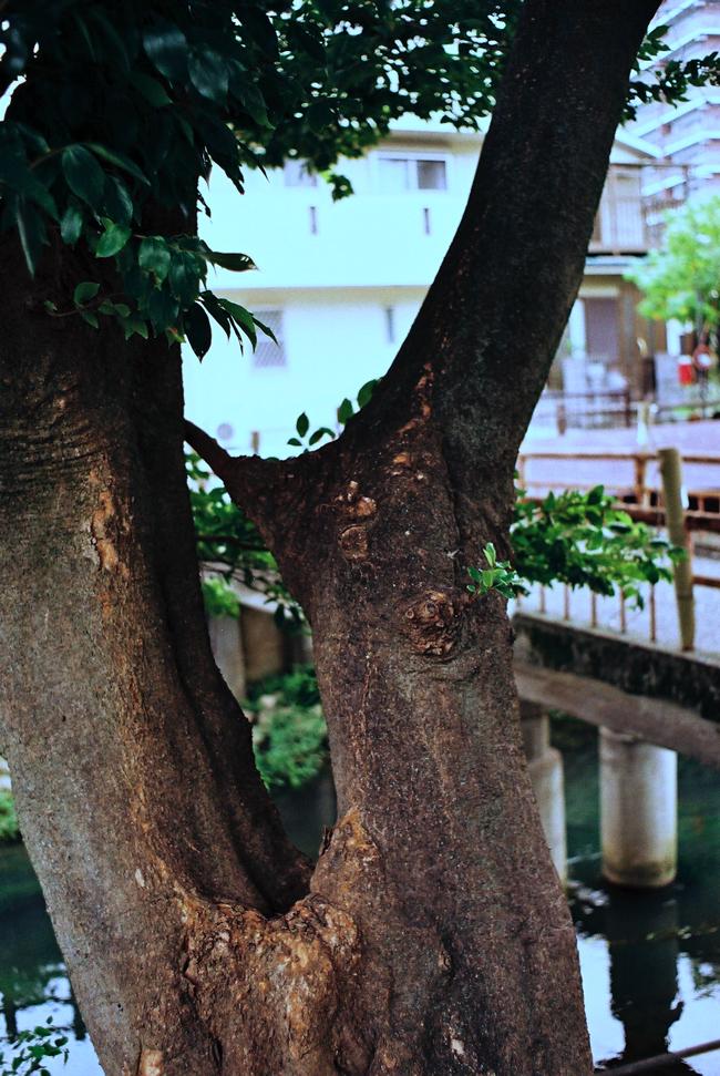フィルムカメラで巡る坂川(後編) ペンタックスME-Super とシグマDP2xで_c0223825_2330359.jpg