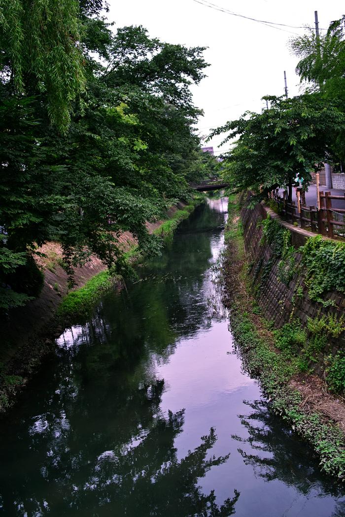 フィルムカメラで巡る坂川(後編) ペンタックスME-Super とシグマDP2xで_c0223825_23503551.jpg