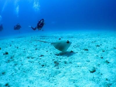 水納島はピカピカの透明度♪♪_a0156273_17452520.jpg