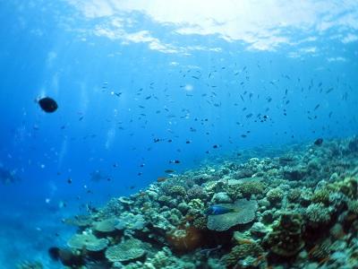 水納島はピカピカの透明度♪♪_a0156273_1748113.jpg
